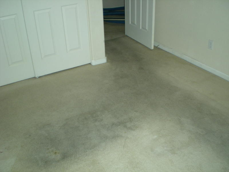 Picture before carpet cleaning of a Peoria home